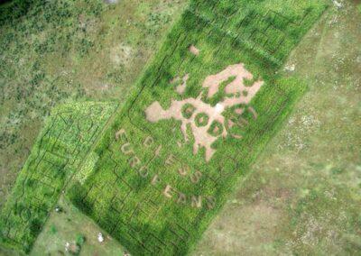 kukuruzu-labirintas-2010-1